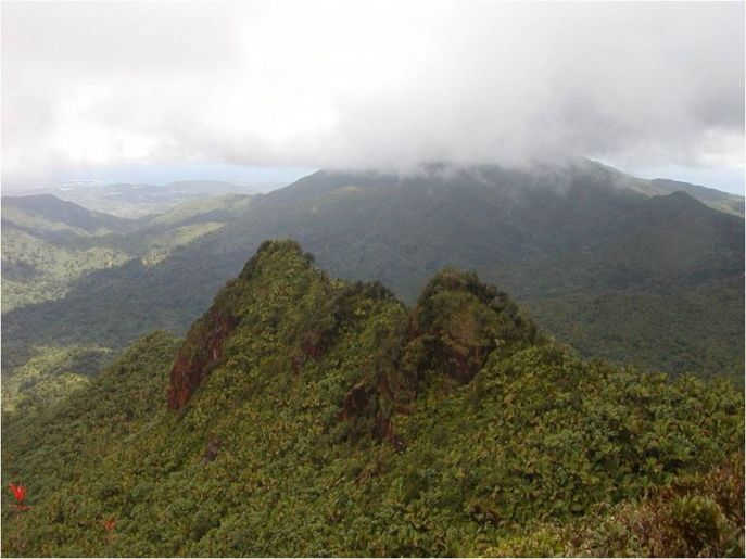 Luquillo rainforest in northeast Puerto Rico- a steep, mountainous, tropical forest that has been the site of extensive ecological research for decades