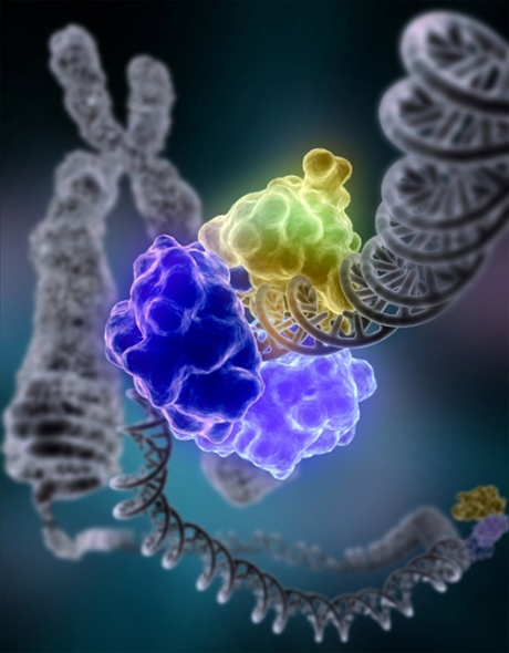 DNA ligase repairing a DNA molecule that has suffered a double-strand break. Credit: Wikipedia
