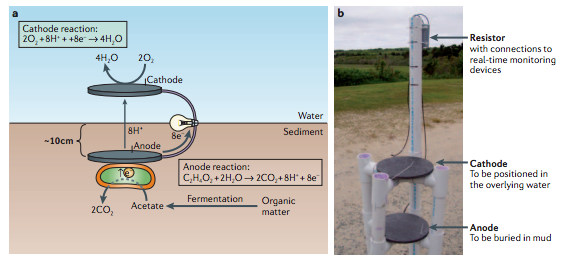 A sediment microbial fuel cell. Credit: Lovely 2006, Nature.