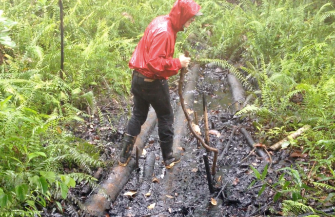 AMP volunteer searching for petro-tolerant fungi in contaminated sites