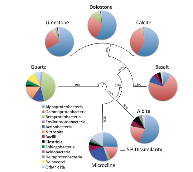 Composition of bacterial communities grown on different mineral surfaces. From Jones & Bennet 2014.